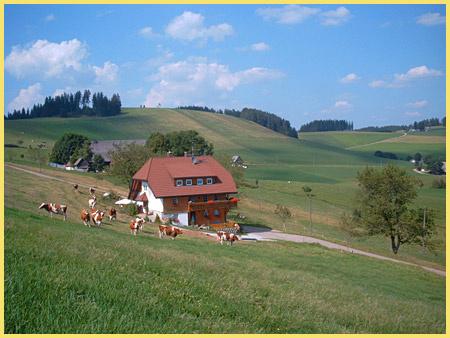 Ferienbauernhof Eckerhof | 1.000 m ü. NN