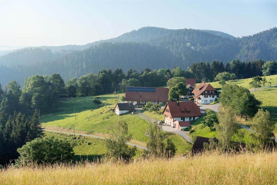 Simonshof | 295-842 m ü. NN