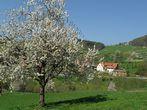 Haashof | 470 m ü. NN